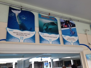 Dolphin Tale 2 Press Junket 081