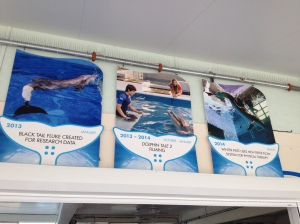 Dolphin Tale 2 Press Junket 083